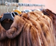 The $500 Million Fur Industry Could Come Crumbling Down