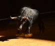 Is The Bull Market On Its Last Legs?