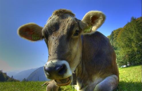 America Has A Milk Problem
