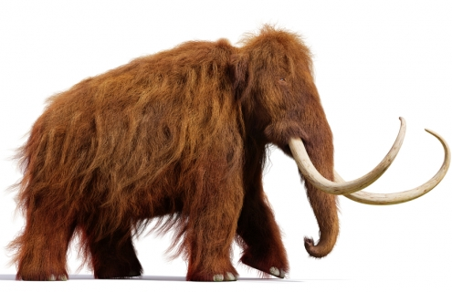3,600 Years Later, Climate Change Turns Mammoths Into $40M Market