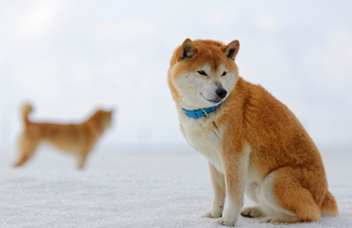 Has The Dogecoin Hype Fizzled?
