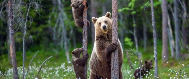 Fed Bears