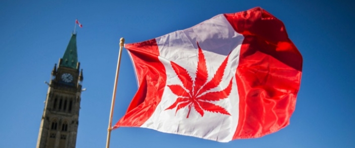 Ontario Moves To Slow Cannabis Drive
